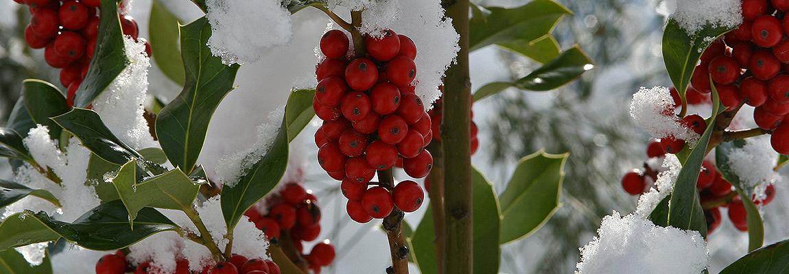 Il Limbara d'inverno