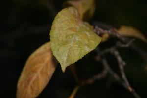 foto_limbara